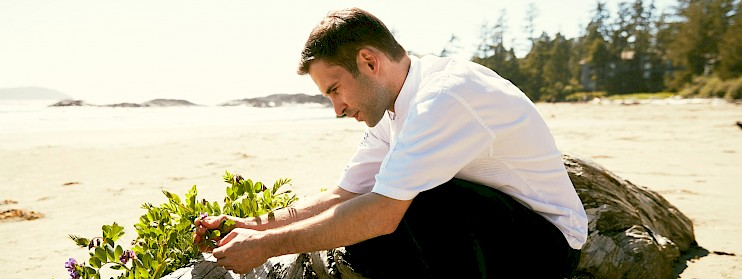 Chef Ingham Harvesting Beach Peas